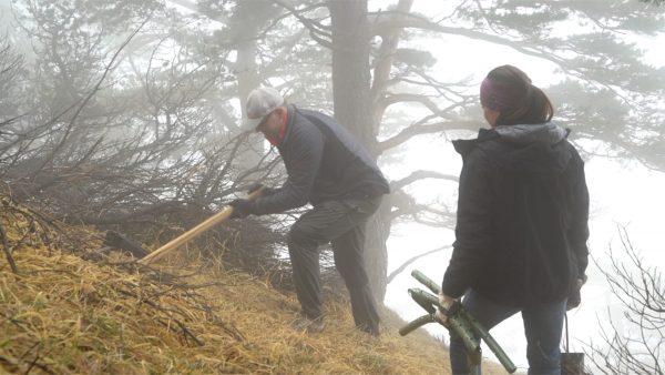 Mitarbeiter pflanzen Bäume
