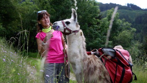 Lamas als Ausgleich in Osttirol