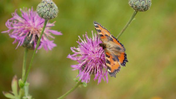 Mit dem Handy Schmetterlinge zählen