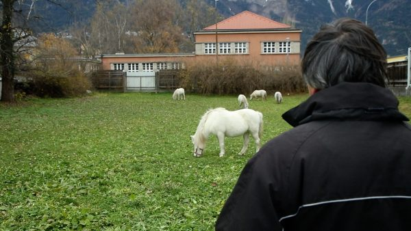 Pony-Verbot am Christkindlmarkt