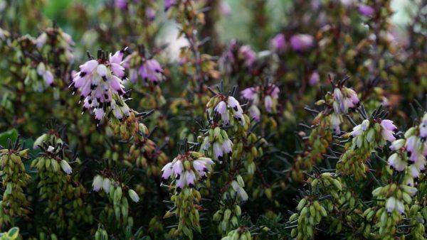 Tirol blüht auf - Pflanzen für Bienen und Schmetterlinge