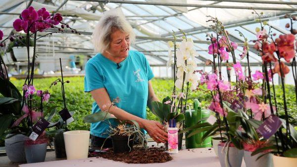 Tirol blüht auf - Orchideen