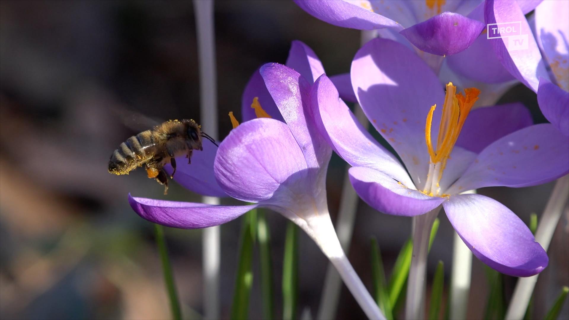 Neue Lebensräume für Biene, Schmetterling und Co.