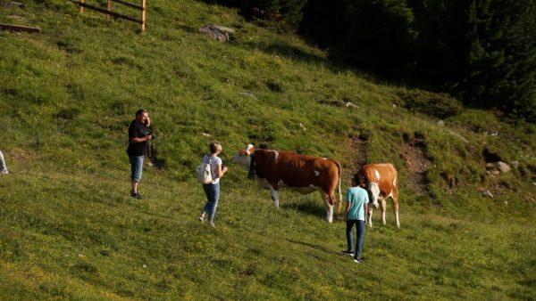 Vom sicheren Umgang mit Kühen